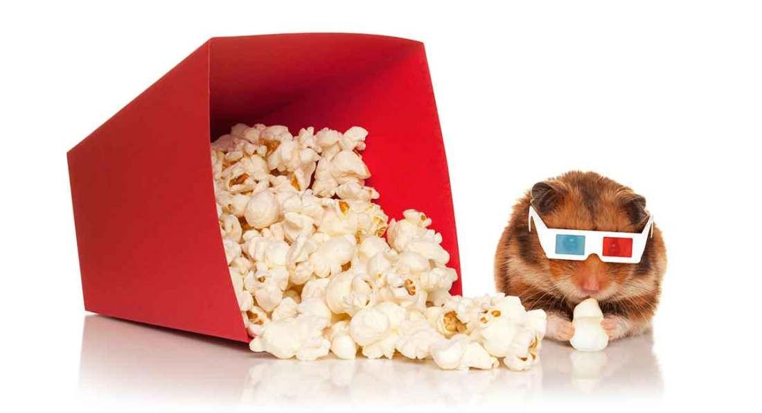 can hamster eat popcorn