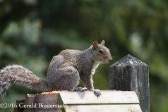 squirreleat-18