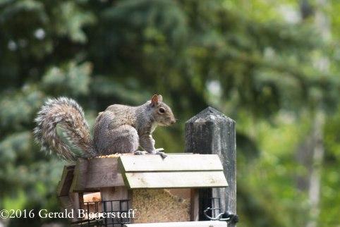 squirreleat-23