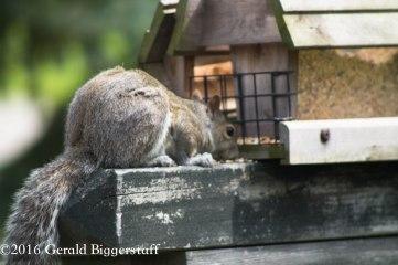 squirreleat-32