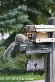squirreleat-35