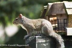 squirreleat-42