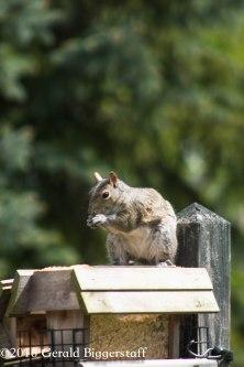 squirreleat-51