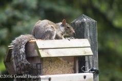 squirreleat-6