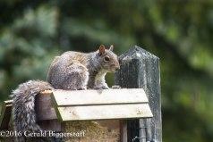 squirreleat-7