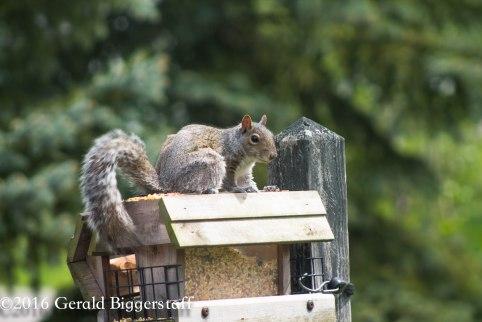 squirreleat-9