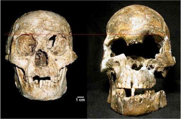 Hobbit Skull Comparison