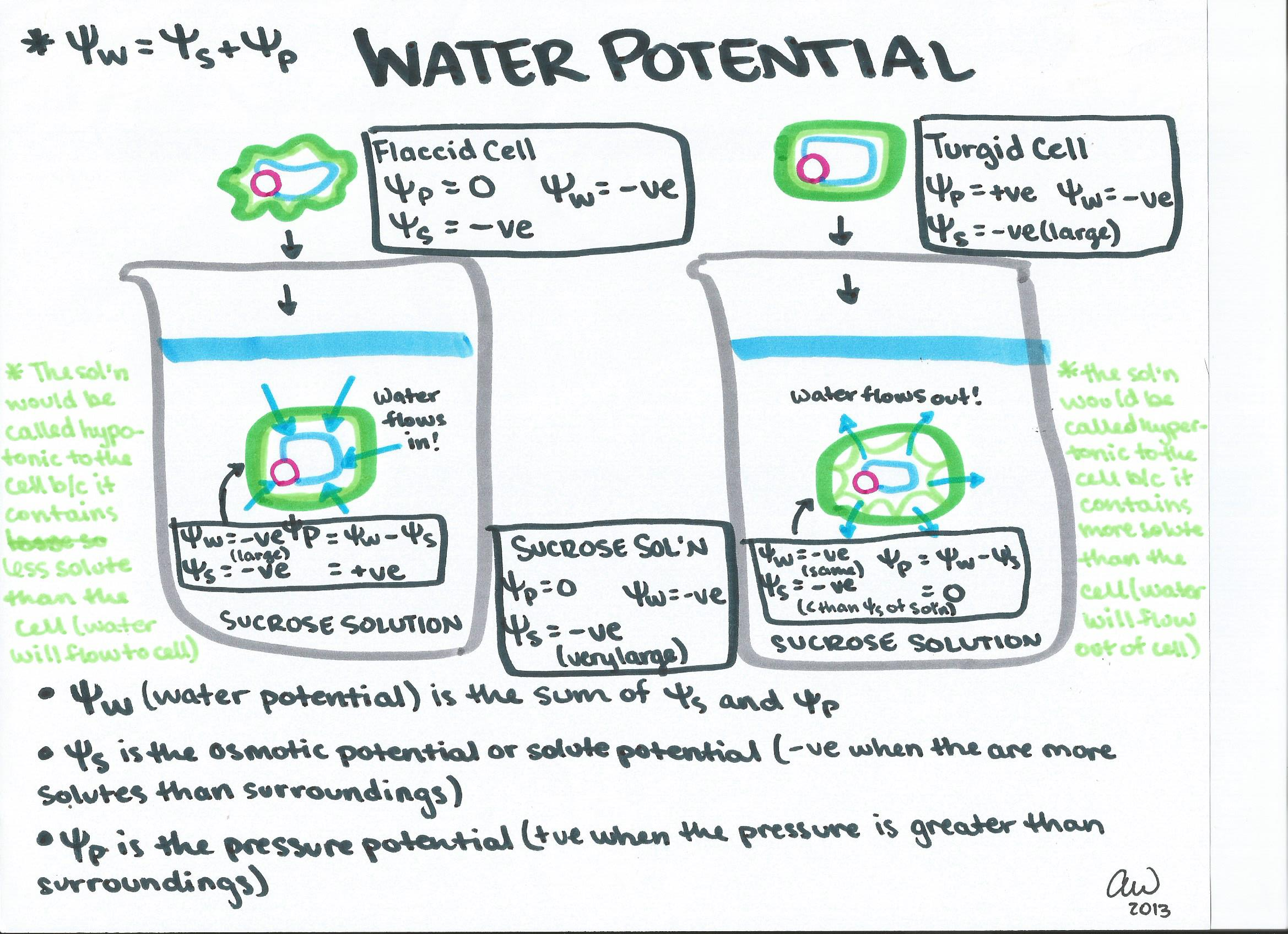 Osmosis And Diffusion Lab Ap Biology