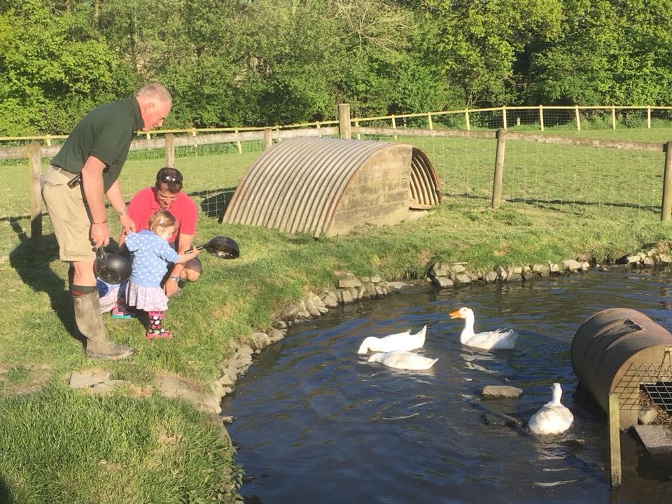 The popitha twins at North Bradbury Farm playing with the ducks