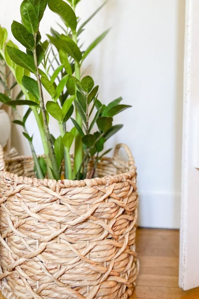 rattan basket used as a plant holder | Poplolly co