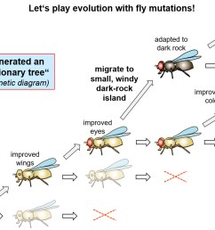 using marker mutations of drosophila to construct an invented evolutionary tree [ 1372 x 914 Pixel ]