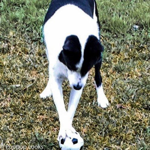 Homemade Healthy Doggy Treats-10-poppopcooks.com