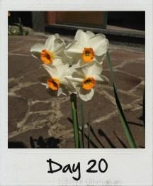 Sono fioriti i miei narcisi preferiti!