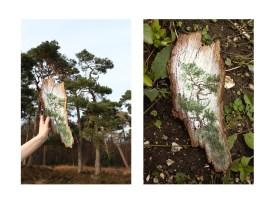 7. Tree on bark