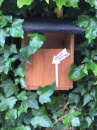 Robin's nestbox