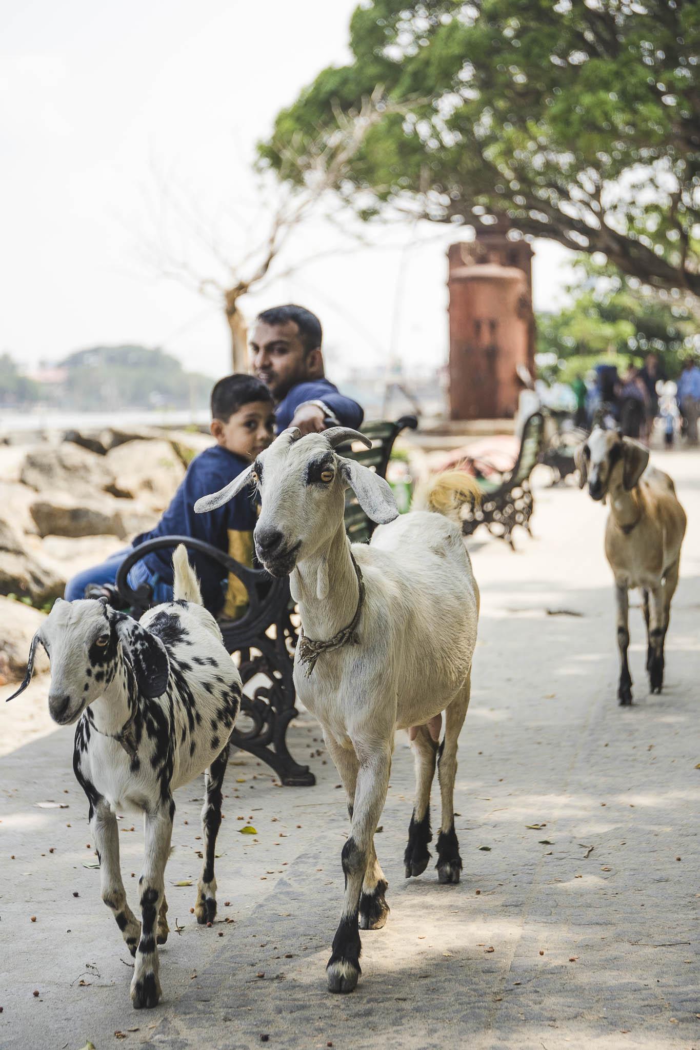 kozy Koczin, Kerala, Indie