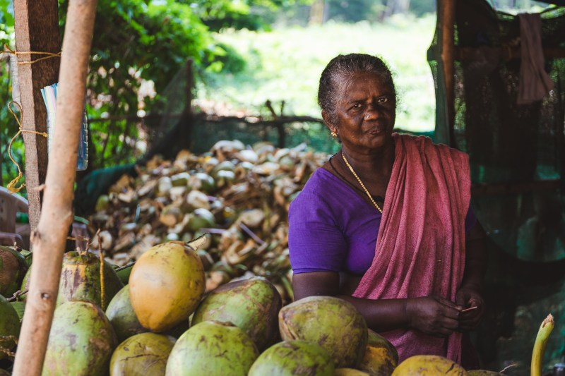 Kerala - stan kokosa
