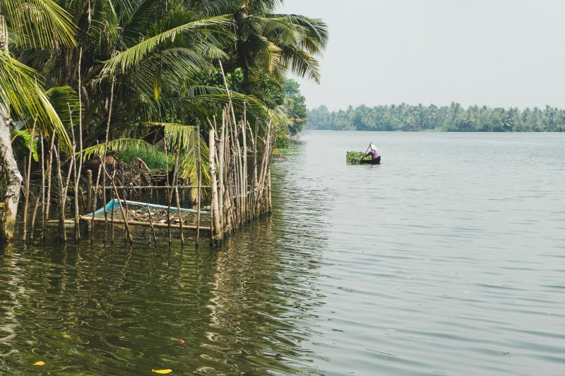 Backwaters, Kerala, India