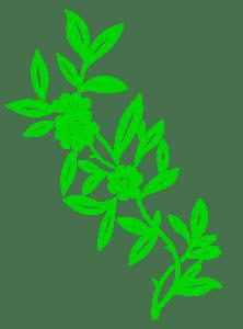 FLOWER BRIGHT GREEN TRANSPARENT BACKGROUND
