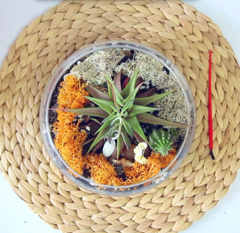 Terrariums with Cactus and Succulents - DIY Your Own Terrariums Instructions