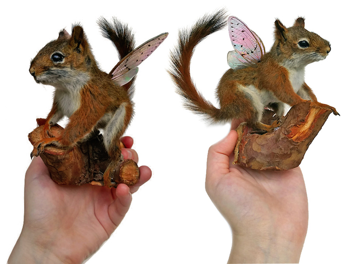 Kristin Jarvis Squirrel Fairy Taxidermy Art