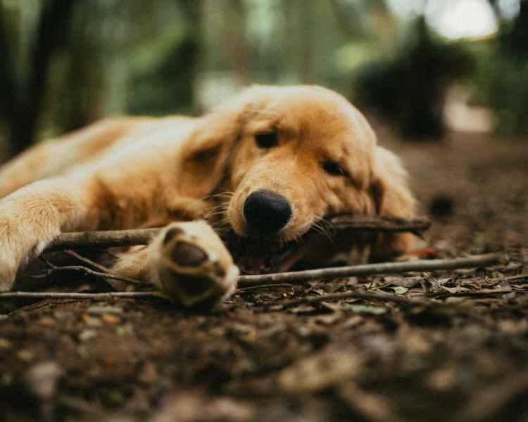 Popsicle Society - dog