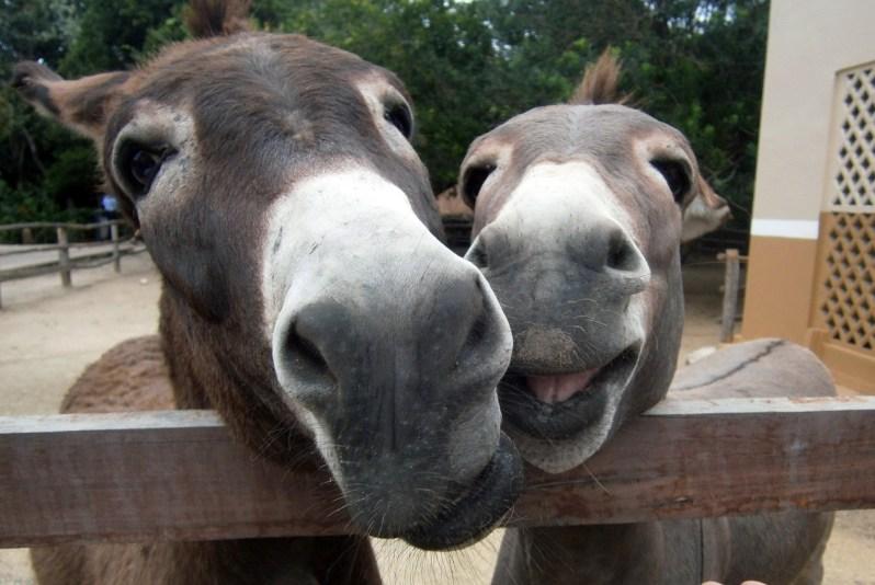 Popsicle Society-smiling donkeys