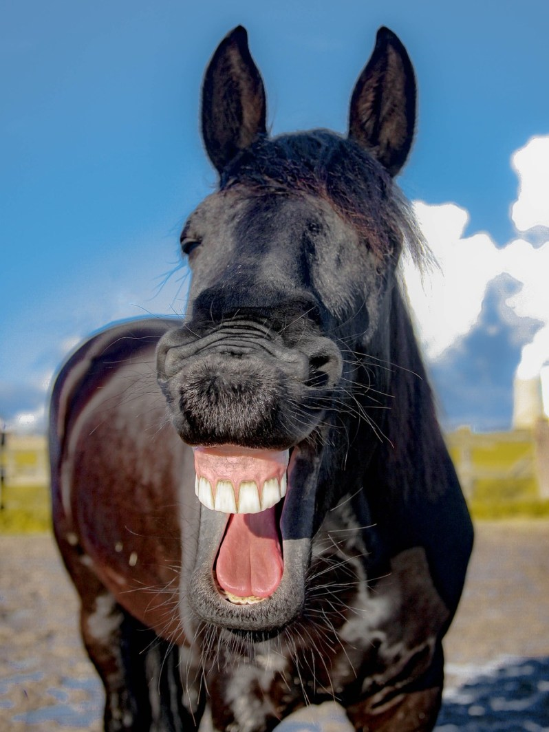 horse-laughing-Popsicle Society