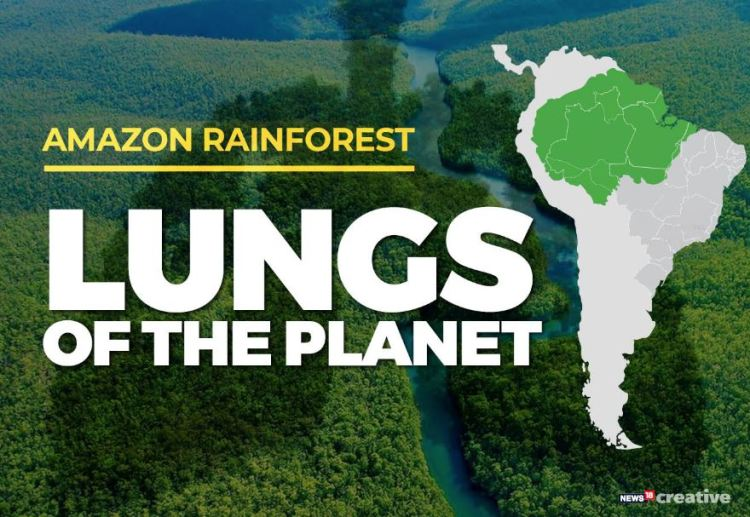 Amazon rainforest the lung of the planet_Popsicle Society