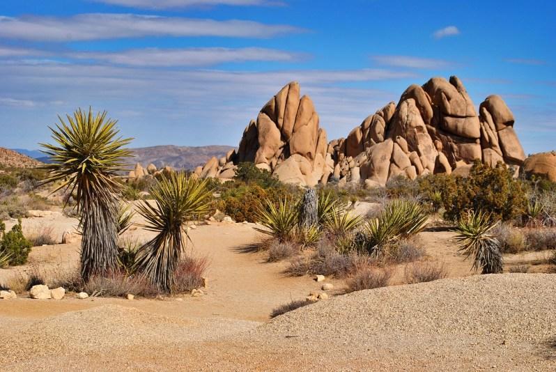 Mojave Desert_Popsicle Society
