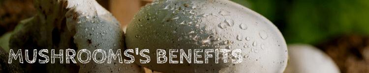Mushrooms benefits_Popsicle Society