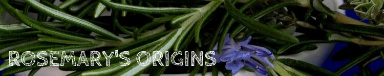 Rosemary Origins_Popsicle Society