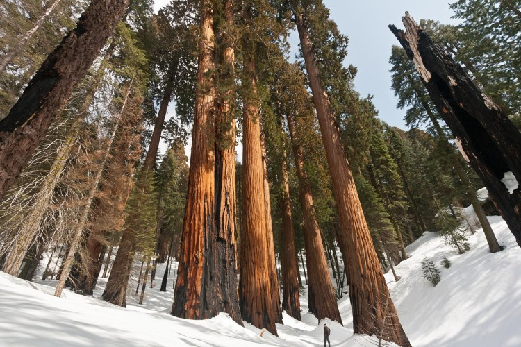 Sequoia National Park_Popsicle Society