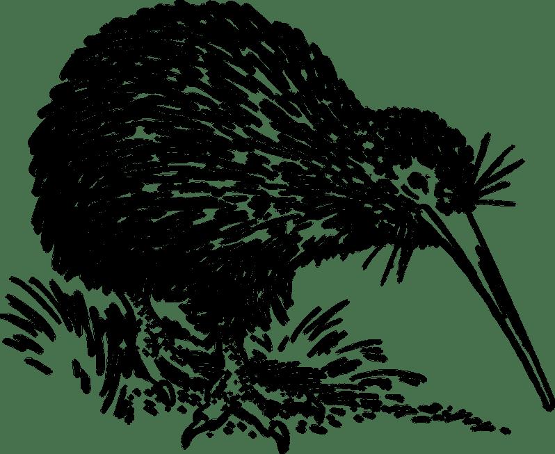 Kiwi bird_Popsicle Society
