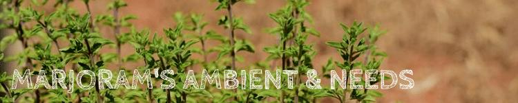 Marjoram ambient & needs_Popsicle Society.