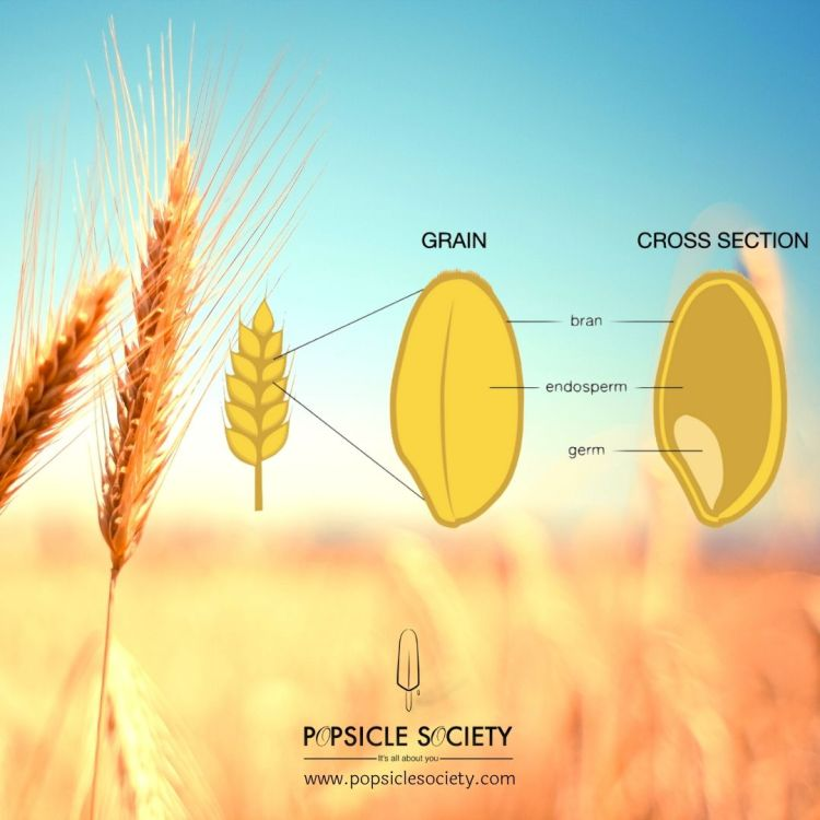 Kernel of wheat_Popsicle Society