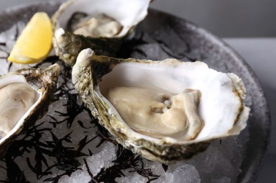 live-irish-oysters-nude seafood
