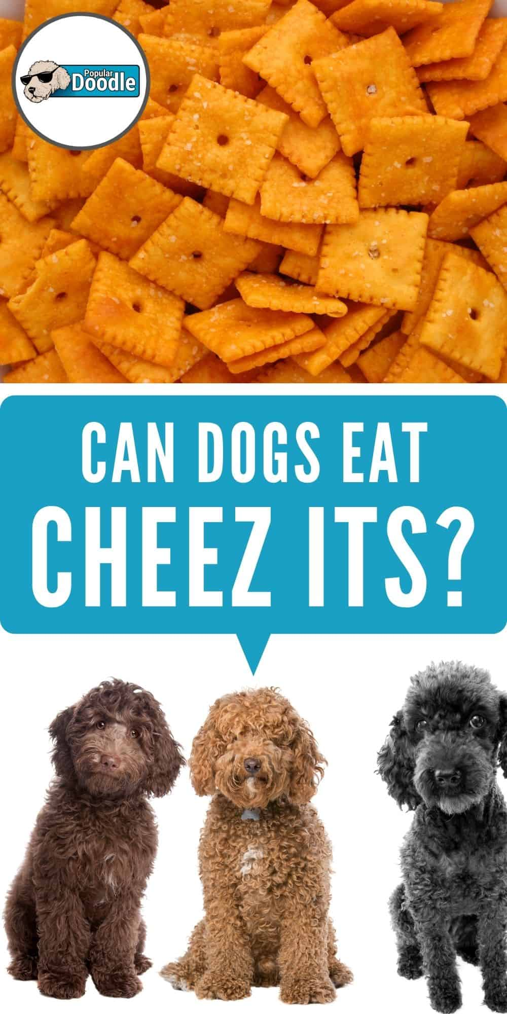 Can Dogs Eat Cheez Its? | Are Cheez Its Bad for Dogs?