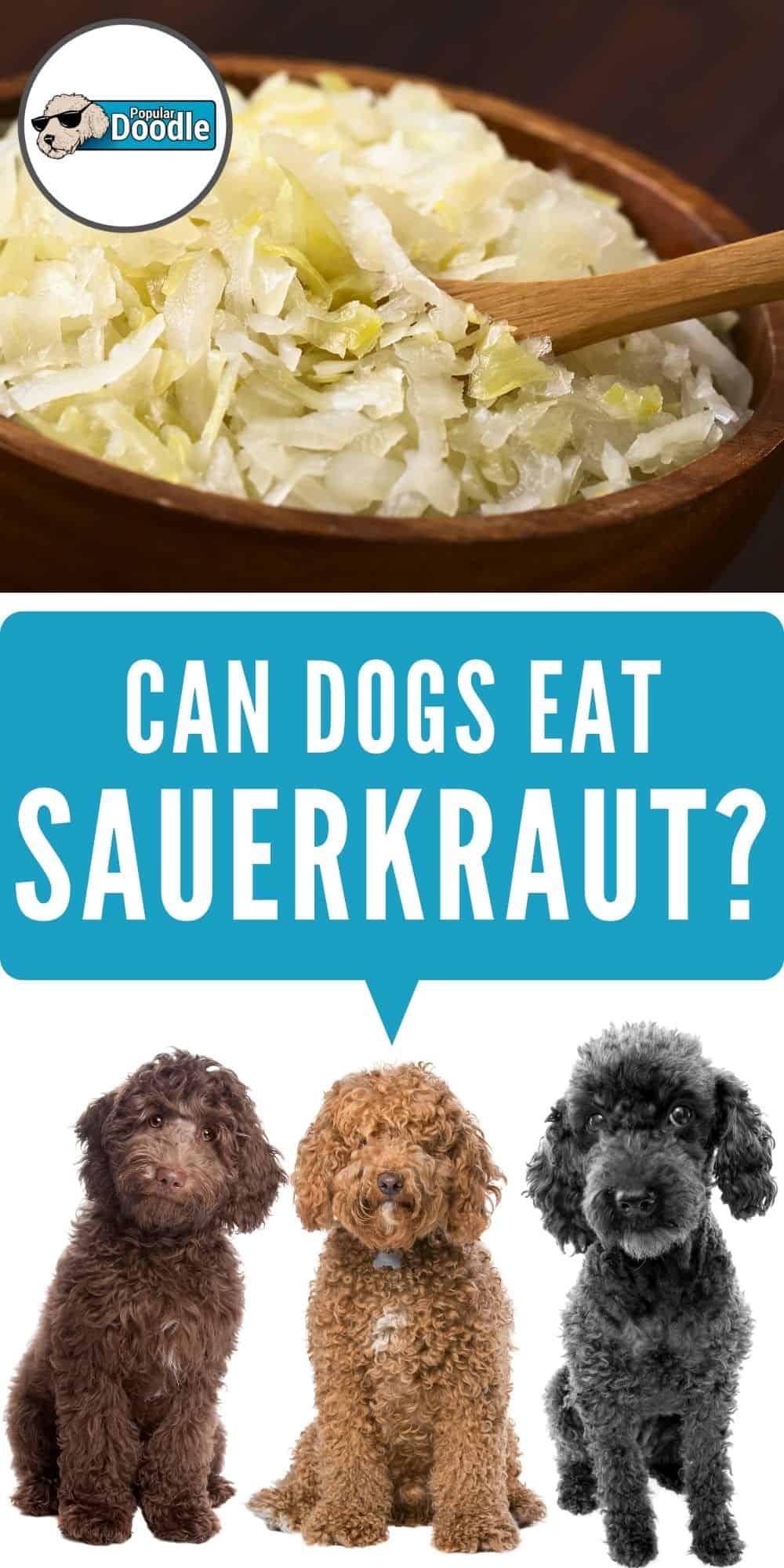Can Dogs Eat Sauerkraut?   Is Sauerkraut Good For Dogs?
