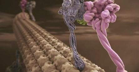 Микротрубочки