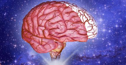 Мозг принимает решение о наказании