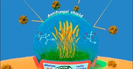 Из пероксидов создали противогрибковые препараты