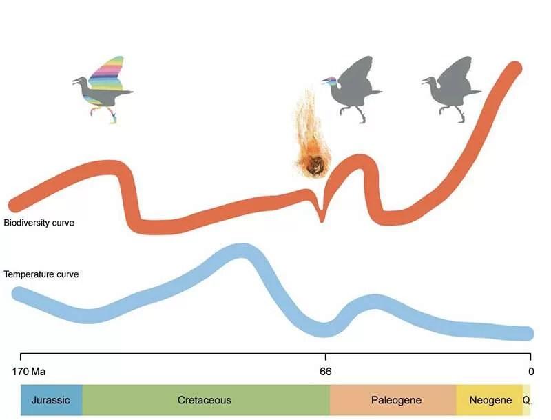 Изменение климата повлияло на эволюцию биоразнообразия птиц