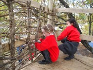 weaving in the fresh coppice