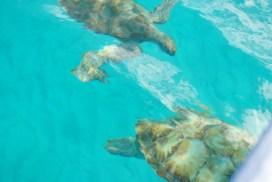 Barbados 2011