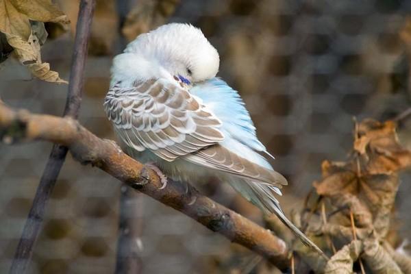 Bird asleeping on a branch
