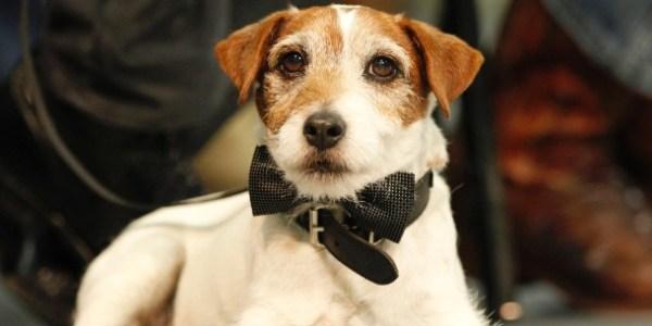 """Cachorro Uggie, do filme """"O Artista"""", morre aos 13 anos"""