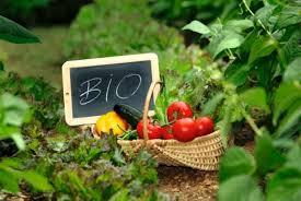 organiczna żywność bio