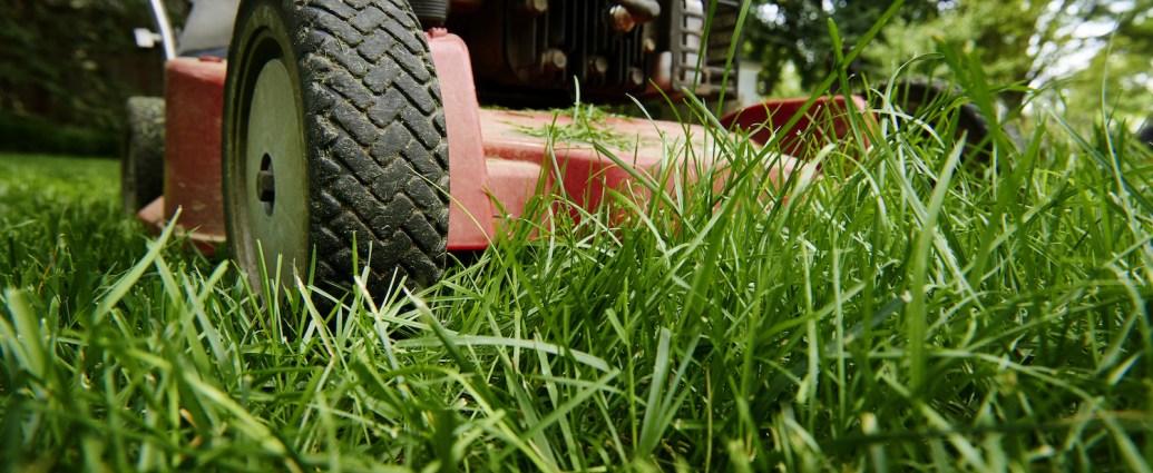 Jak dbać o trawnik latem