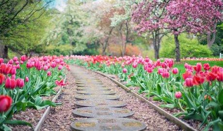 Ścieżka w ogrodzie wykonana z gruzu